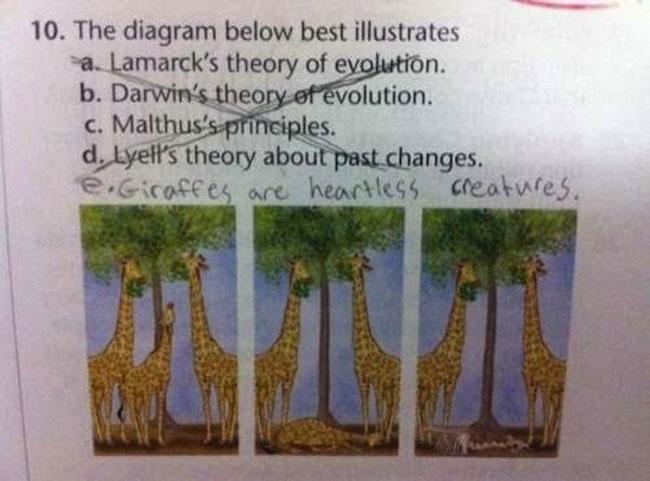 grappige-examen-antwoorden-21