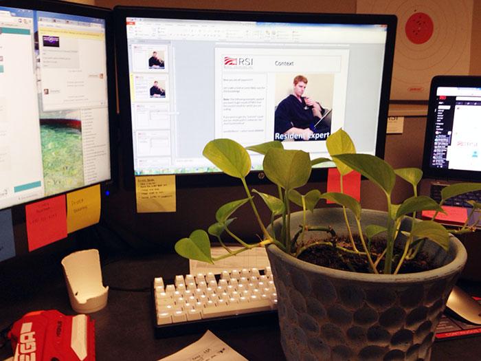 presentatie-plant