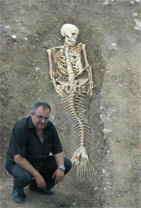 zeemeermin-skelet