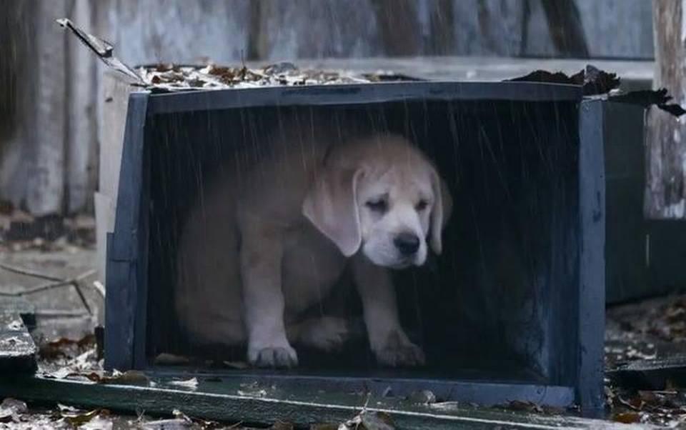 budweiser-reclame-puppy