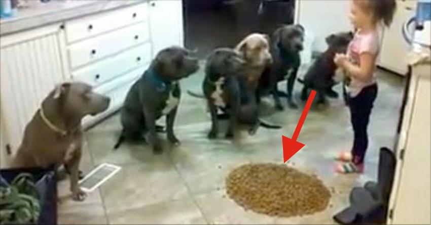 honden-tussen-eten