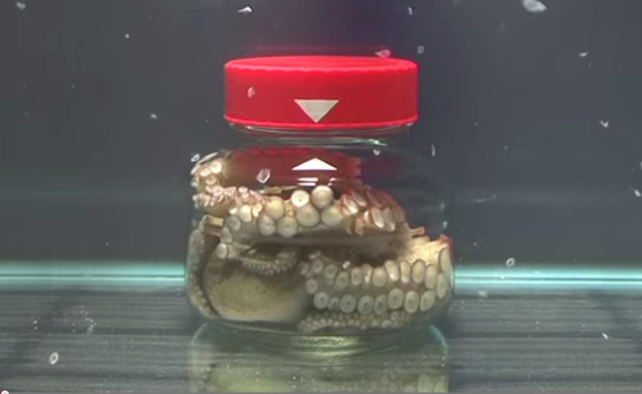 octopus-in-pot