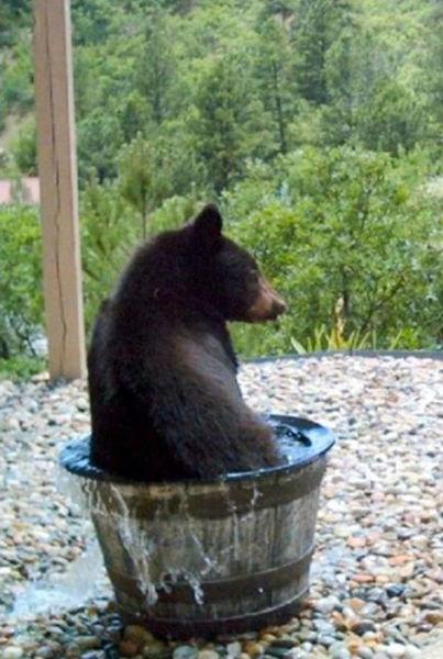badderende-beer