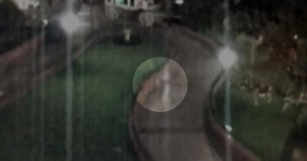 beveiligingscamera-disneyland