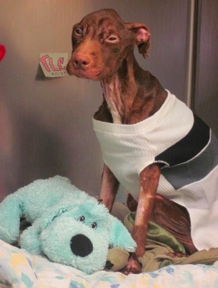 hond-in-dierenhospitaal