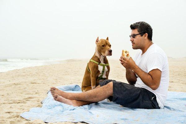 hond-op-strand