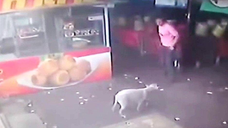 man-probeert-hond-te-schoppen-karma