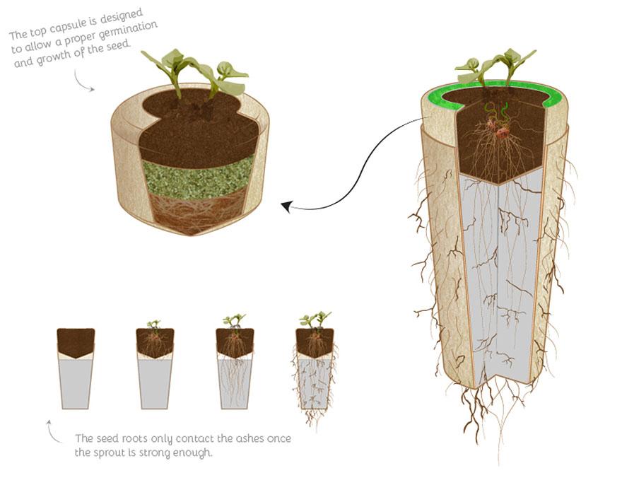 bios-urn-boom-na-dood-werking