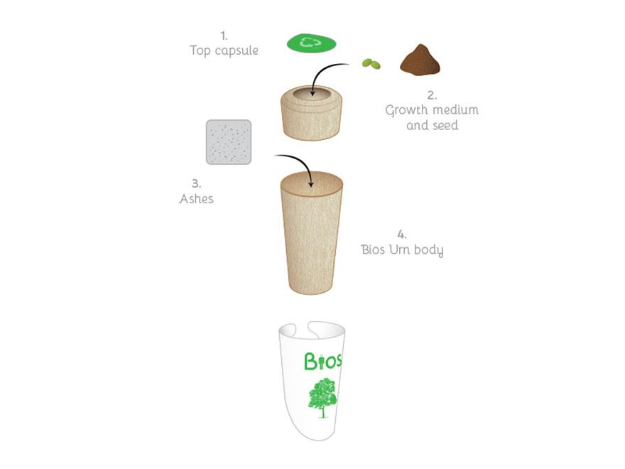 bios-urn-boom-na-dood