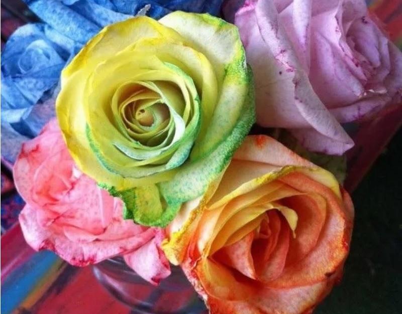 rozen boeket bloemen