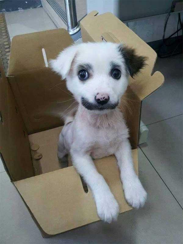hond-in-doos