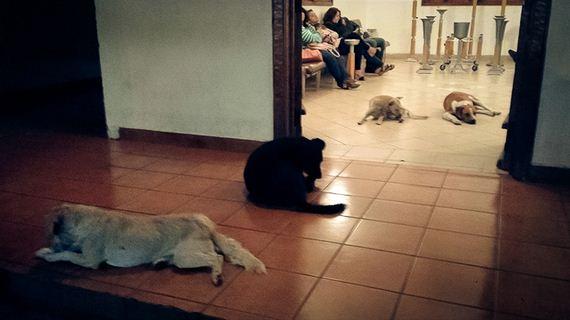 honden-op-begrafenis