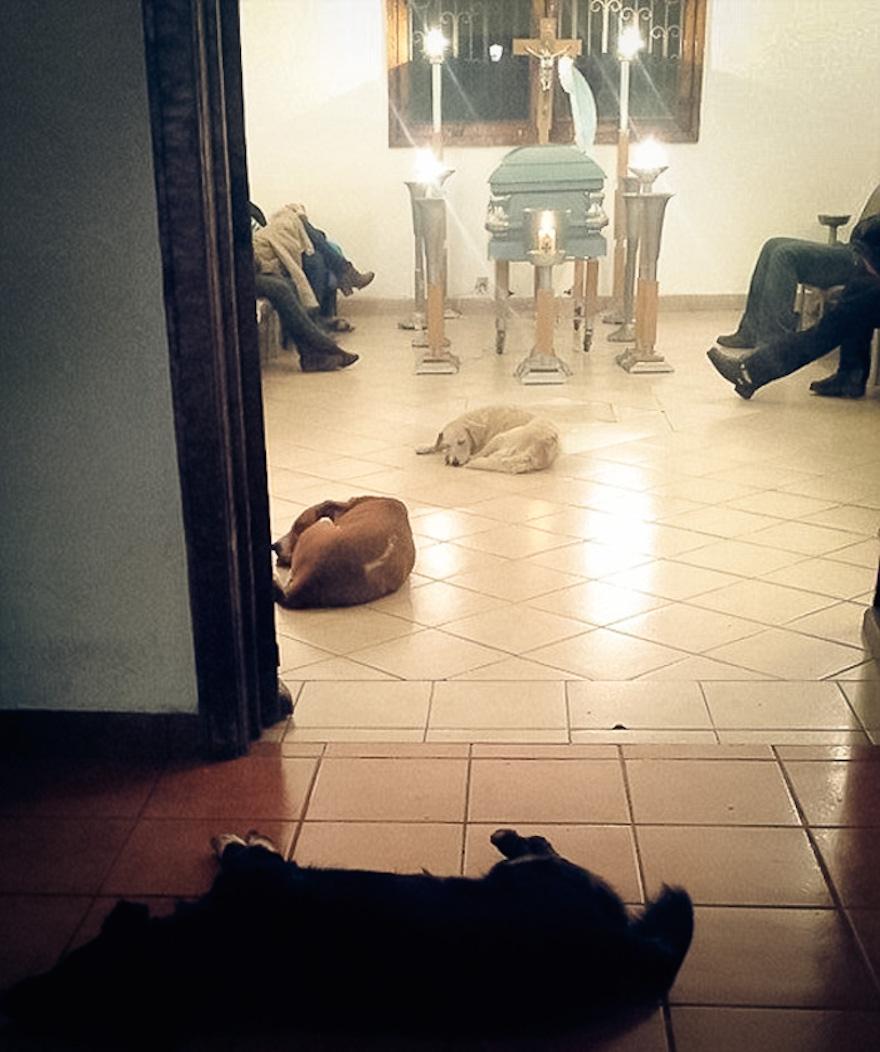 honden-op-uitvaart
