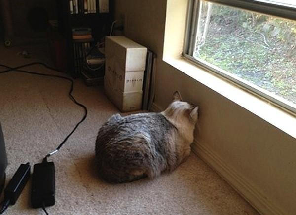 huisdier hoofd tegen muur