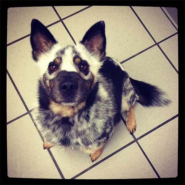 unieke-hond