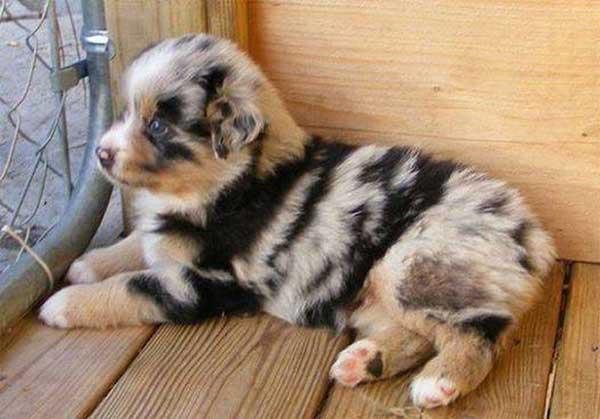 vacht pup