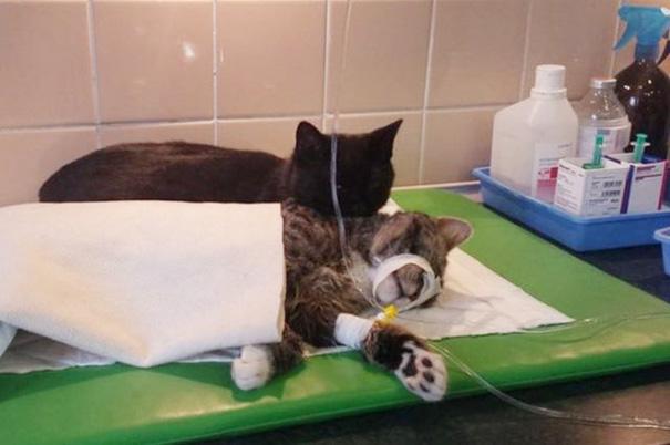 verpleegkundige-kat