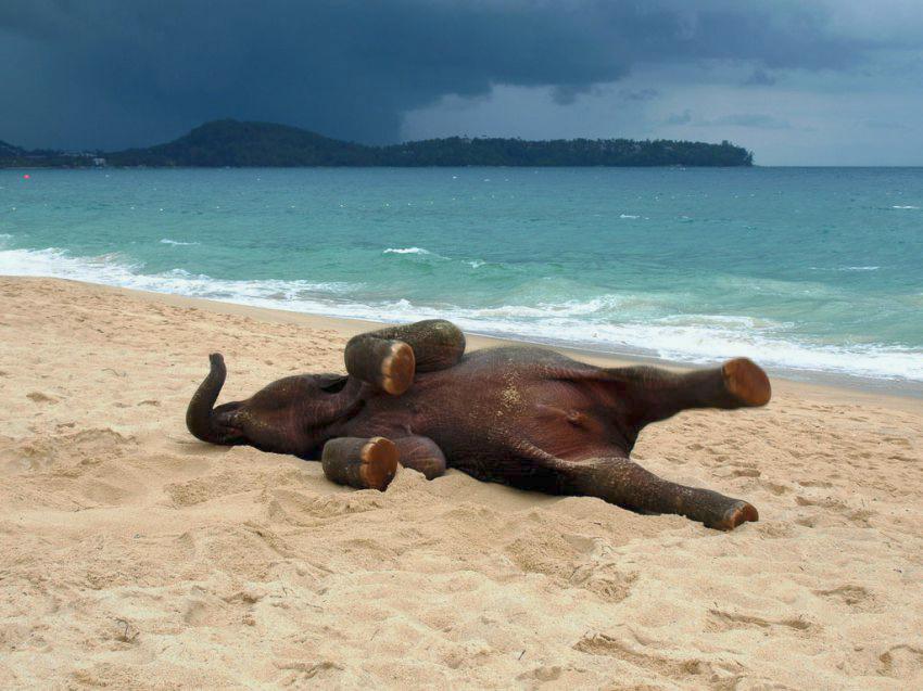 strand zee zand