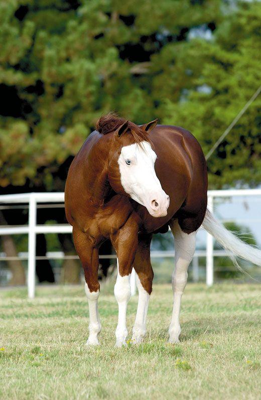 bruin paard weide