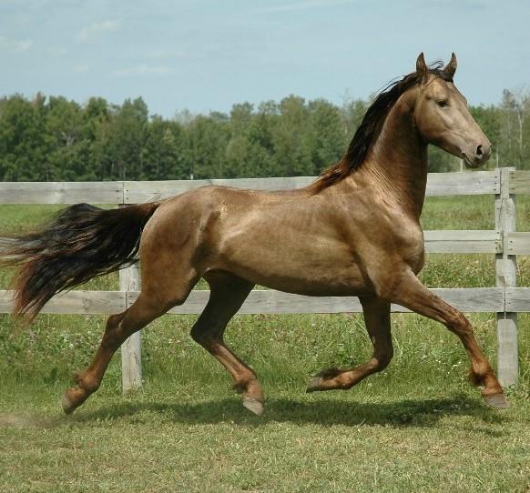 Klassiek paard weide hek