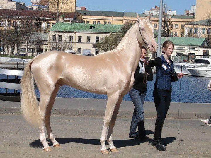 paard vacht