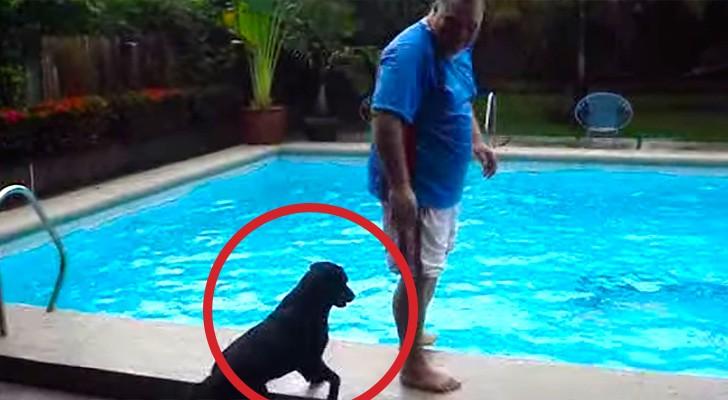 hond-bij-zwembad