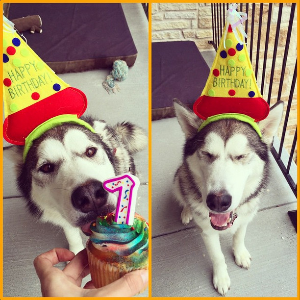 jarige-hond