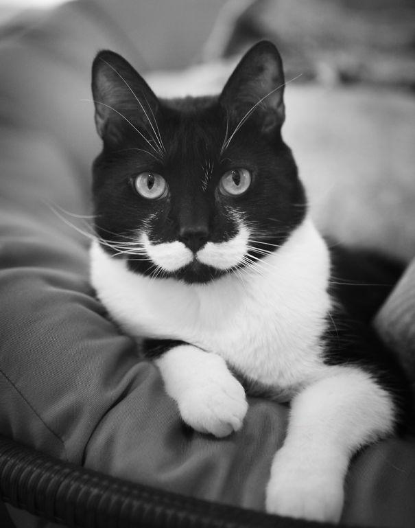 kattenvacht vacht kat