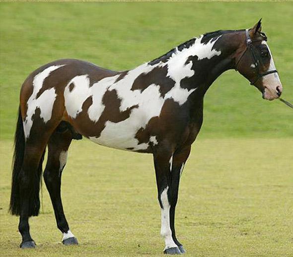 paard-markering