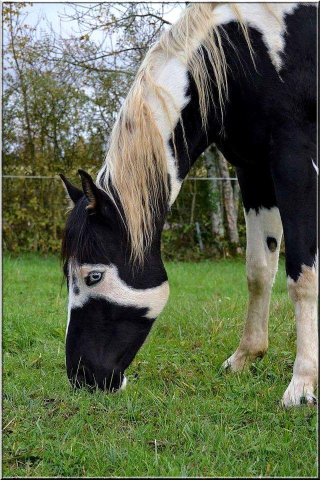 paard weide