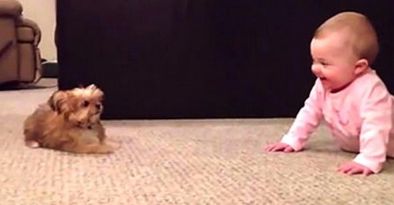 puppy en baby