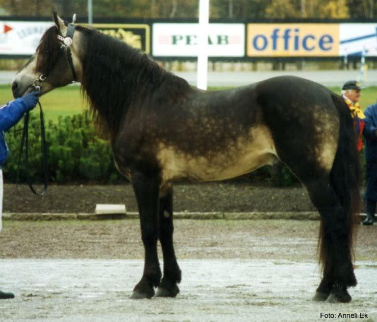 paardensoort