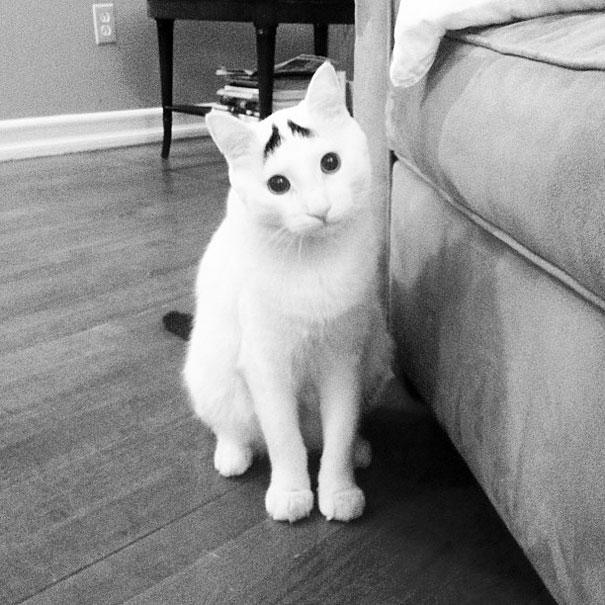 kat vacht kattenvacht
