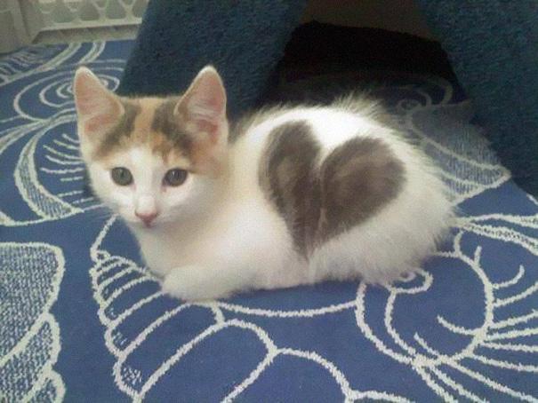 kat markering vacht