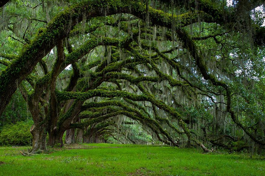 eikenbomen