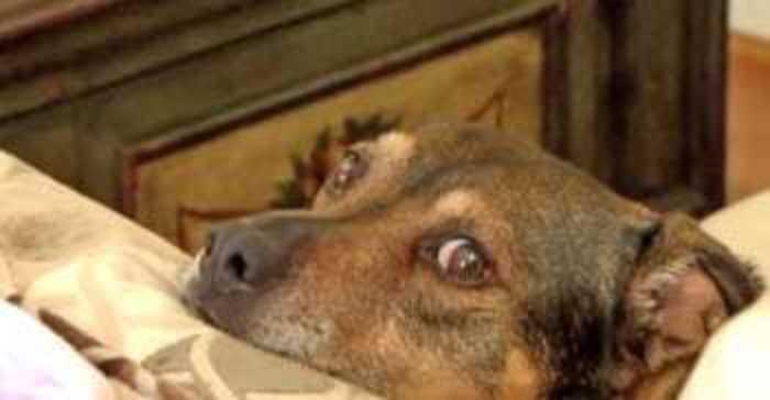 hond reddingshond