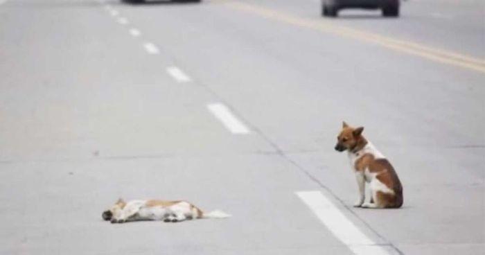 hond pup puppy