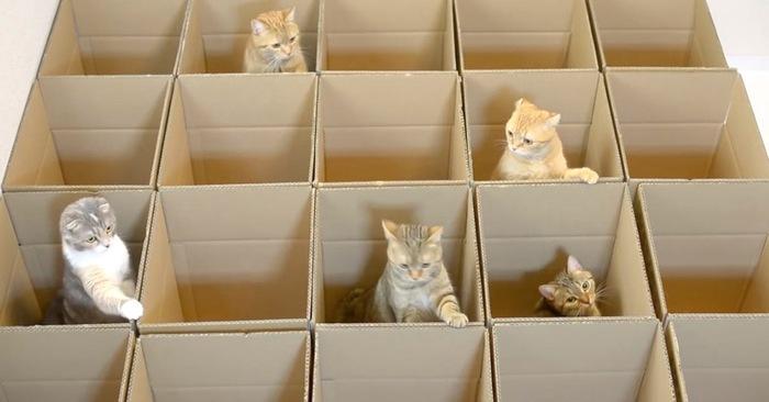 katten spelen dozen kattenkruid speeltjes kattenspeeltjes catnip