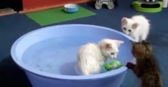 katten kattenverzekering katten verzekering kat bad