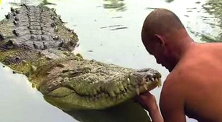 krokodil oever costa rica dierenverblijf
