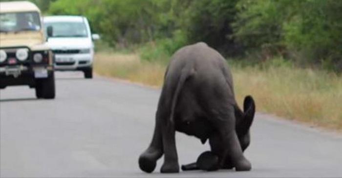 olifant dierenverblijf national park