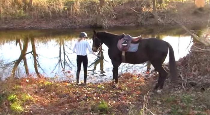 paard hoef verzorging paardrijden manege hoefijzer
