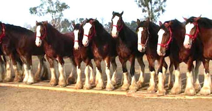 paarden commercial reclame