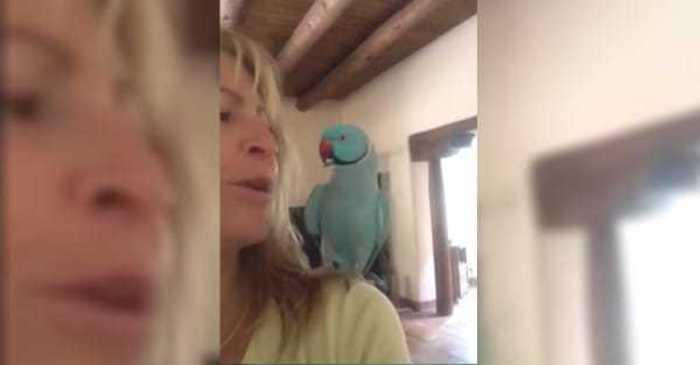 parkiet papegaai kooi voliere