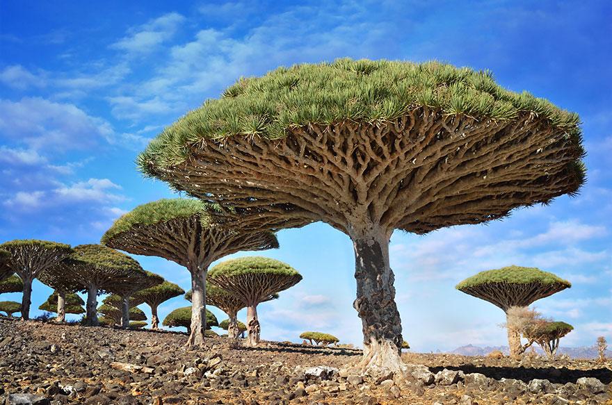 yemen boom natuur plant