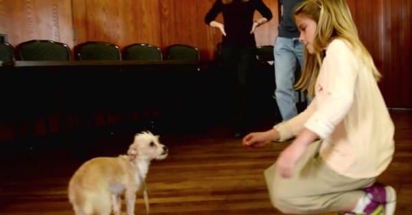 hond adopteren asiel kennel