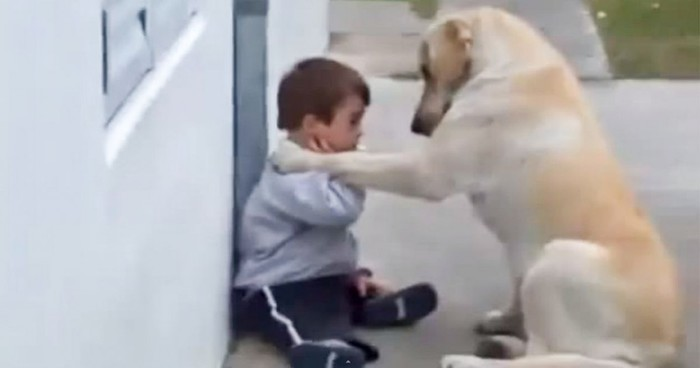 autisme hond geleidehond