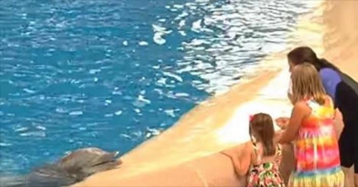 dierentuin dolfijn