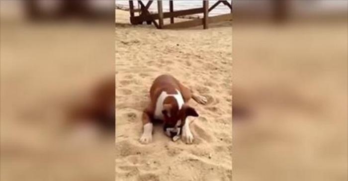 hond strand picknick