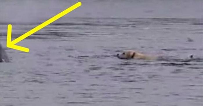 hond zwemmen